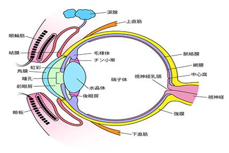 高度近视并发症之玻璃体混浊能治好吗?