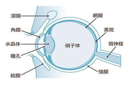 视网膜脱离 专家提醒:这种眼科疾病要重视!